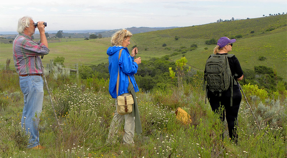 Hiking amoung the fynbos and enjoying most beautiful scenaries