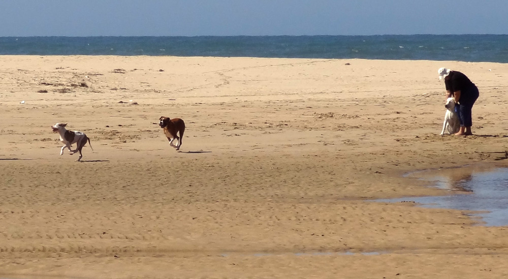 Dogs running on the beach in Great Brak River